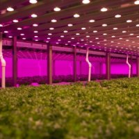 #smart industry: Onbespoten groenten vol...